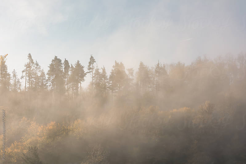 Forest covered in morning fog by Pixel Stories for Stocksy United