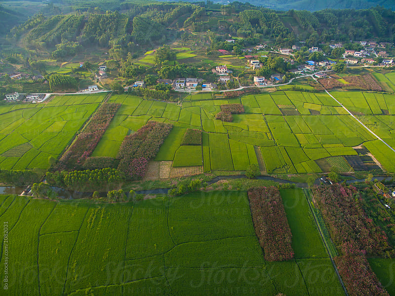aerial view of small village in rice paddy at sunrise by cuiyan Liu for Stocksy United