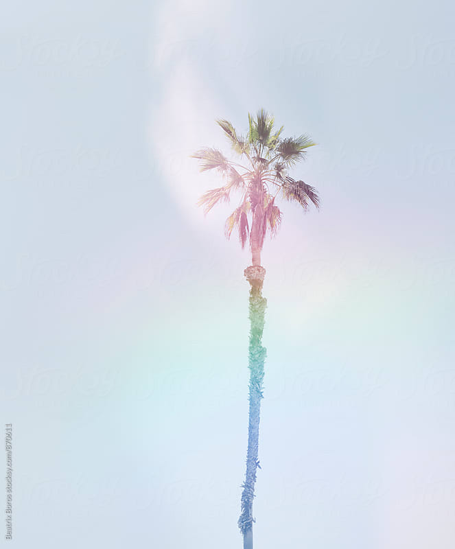 Single palm tree against the sky by Beatrix Boros for Stocksy United
