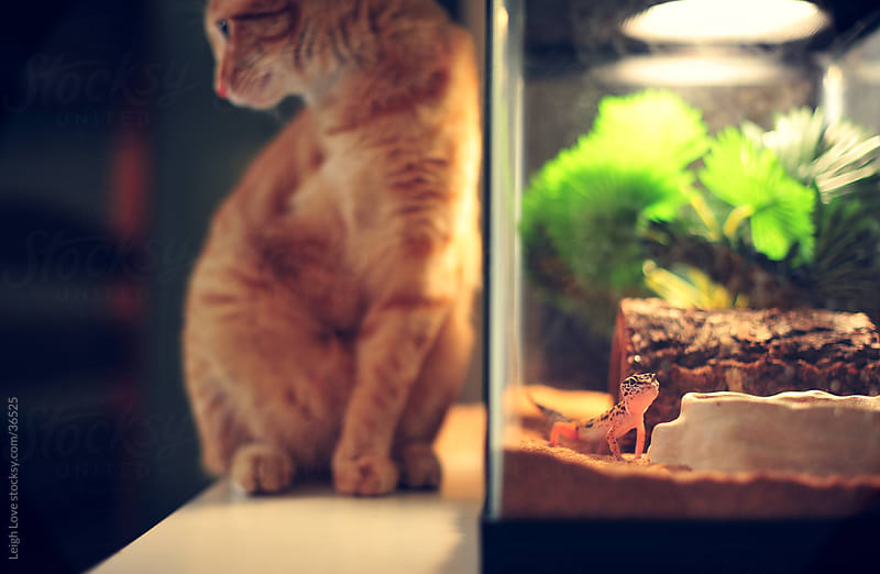 Cat with Leopard Gecko by Leigh Love for Stocksy United