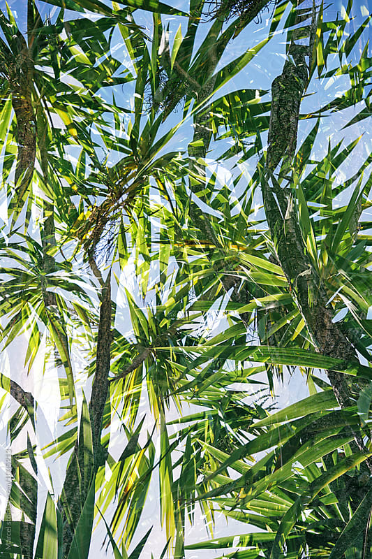 Palm tree double exposure by Marcel for Stocksy United