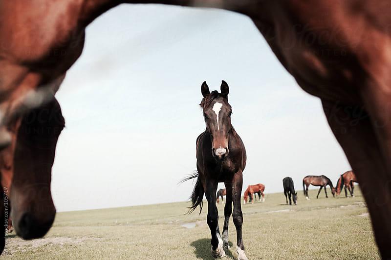 Wild horses by Marcel for Stocksy United