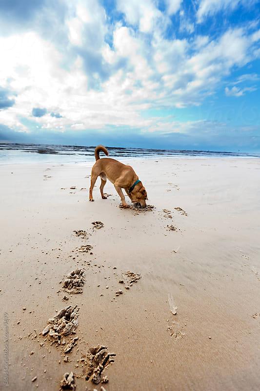 Beach Dog Quality Winter Time by Eldad Carin for Stocksy United