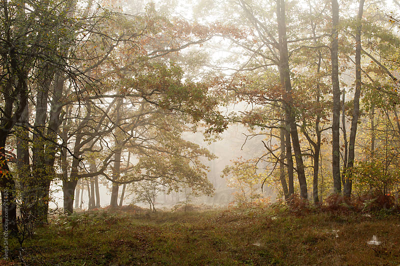 Morning broadleaf forest at the time of the Indian summer. by Svetlana Shchemeleva for Stocksy United