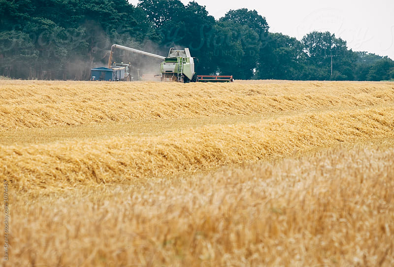 Combine Harvester and tractor collecting grain from a Barley field. Norfolk, UK. by Liam Grant for Stocksy United