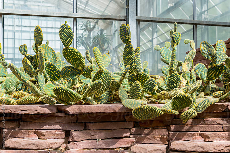 Cacti plants  by Jovo Jovanovic for Stocksy United