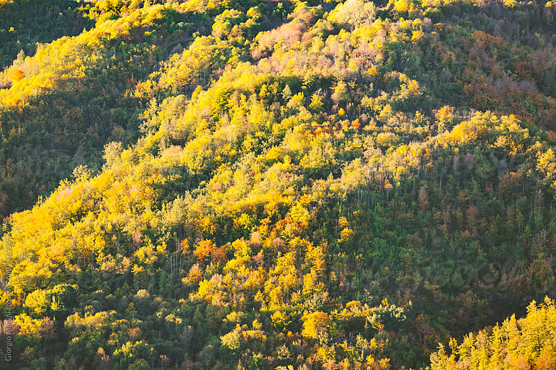 Changing Color Forest during Autumn in Central Italy by Giorgio Magini for Stocksy United