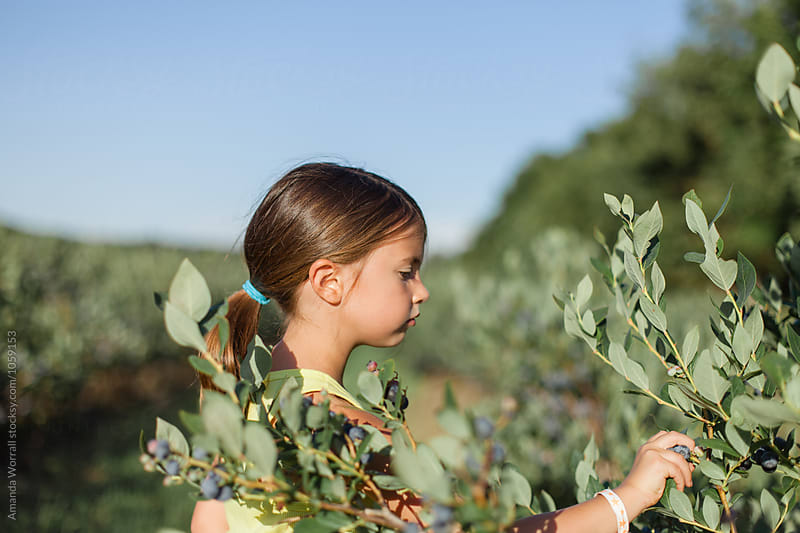 Side view of girl picking blueberries by Amanda Worrall for Stocksy United