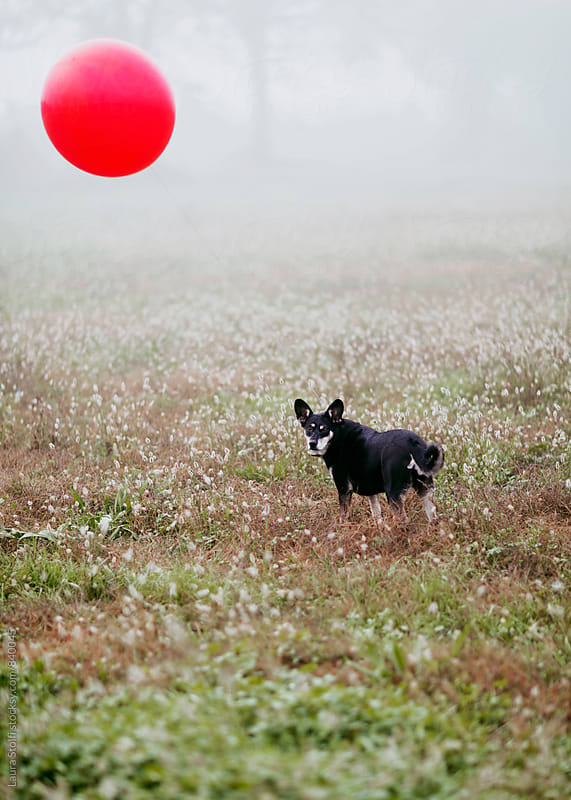 Little dog with red balloon floating above her in foggy field by Laura Stolfi for Stocksy United