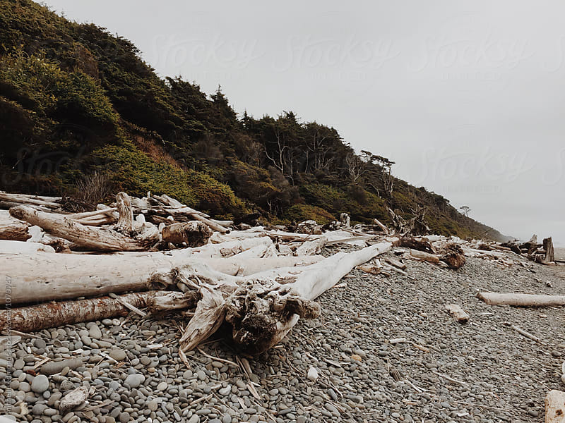 Driftwood on the Pacific Ocean Coast in Washington on a Cloudy Day by michelle edmonds for Stocksy United
