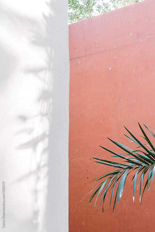 Palm Tree against pink and white wall by Carey Shaw for Stocksy United