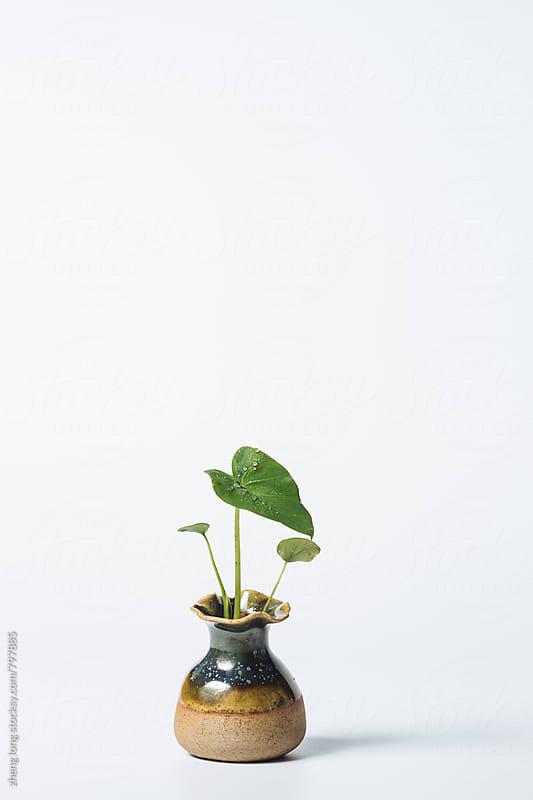 Flower arrangement by zheng long for Stocksy United
