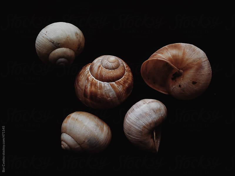 five snail shells on black background by Bor Cvetko for Stocksy United