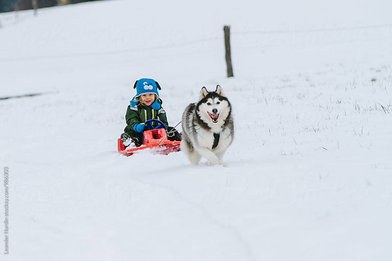 young child and his husky having fun in snowcovered winter lands by Leander Nardin for Stocksy United