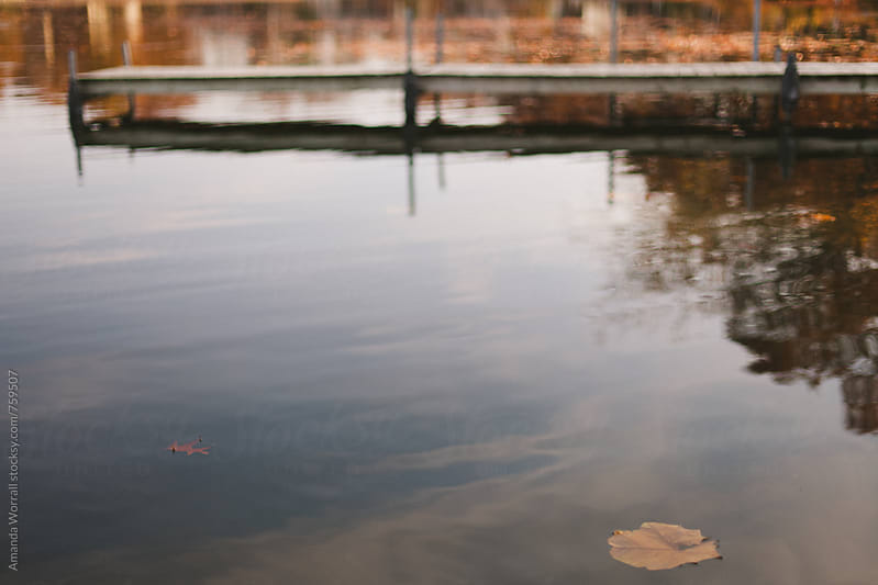 A leaf floats on a lake in the autumn, dock in the background, shallow focus on the leaf by Amanda Worrall for Stocksy United