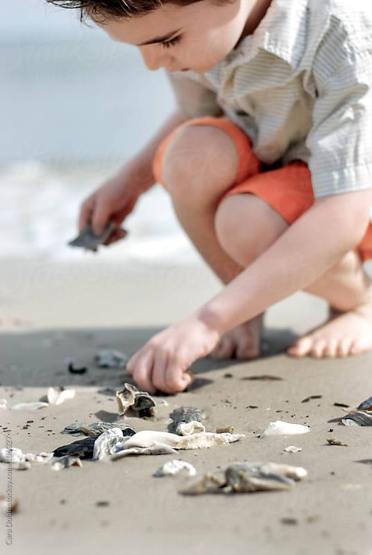 Boy hunts for shells on a beach by Cara Dolan for Stocksy United