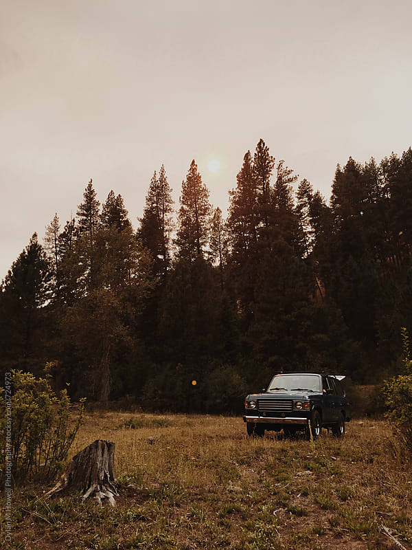 Traveling through the trees. by Dylan M Howell Photography for Stocksy United