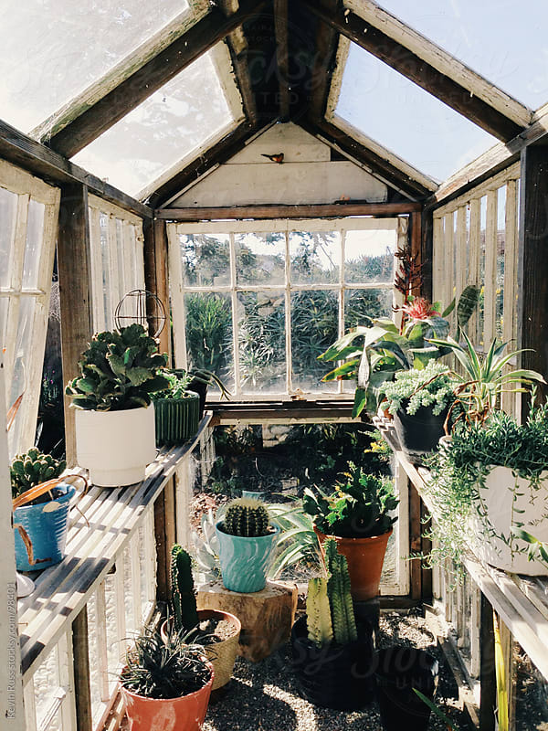 Greenhouse by Kevin Russ for Stocksy United