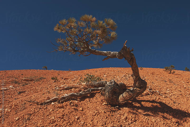 Tree on Sandstone by Nicholas Roberts for Stocksy United