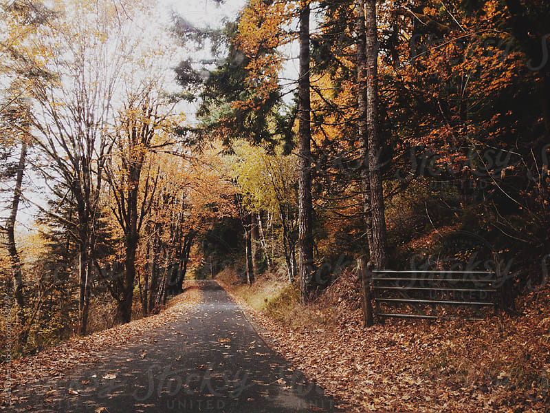Country Road in Autumn by Evan Dalen for Stocksy United