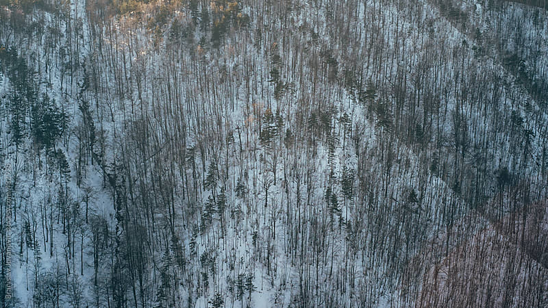Forest in the mountain covered with snow by Branislav Jovanović for Stocksy United