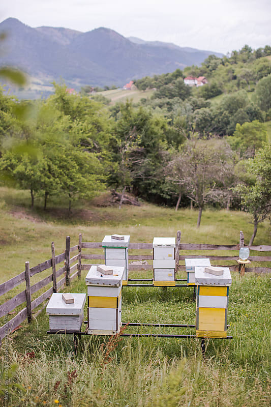 Honey bee farms - honey bee gardens by Jovo Jovanovic for Stocksy United