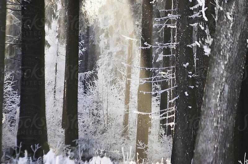 Winter forest by Robert Kohlhuber for Stocksy United