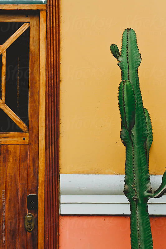 Cactus by Jayme Burrows for Stocksy United