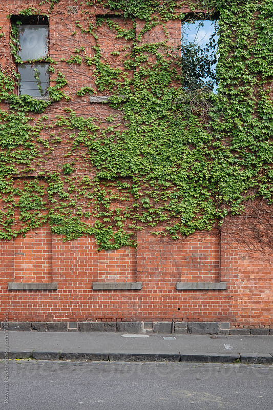 Facade of a derelict building with plant life growing over it by Rowena Naylor for Stocksy United