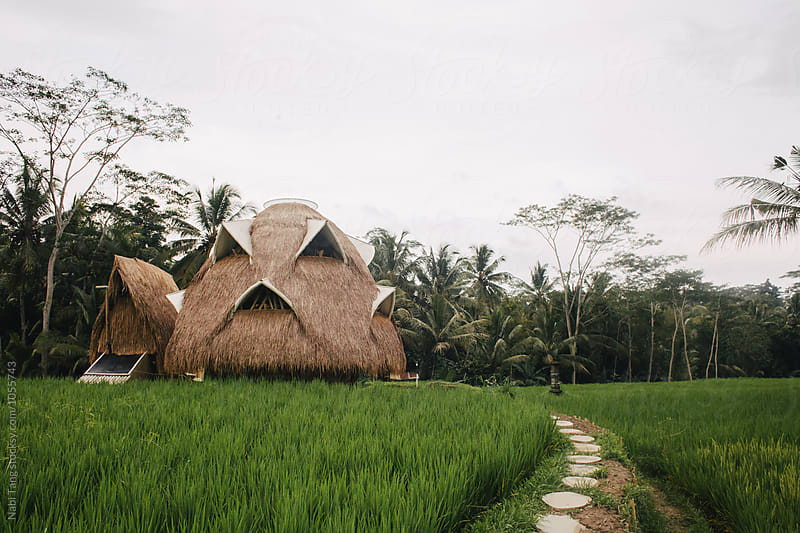 Beautiful bio architecture dome made from bamboo in the middle of the rice field by Nabi Tang for Stocksy United