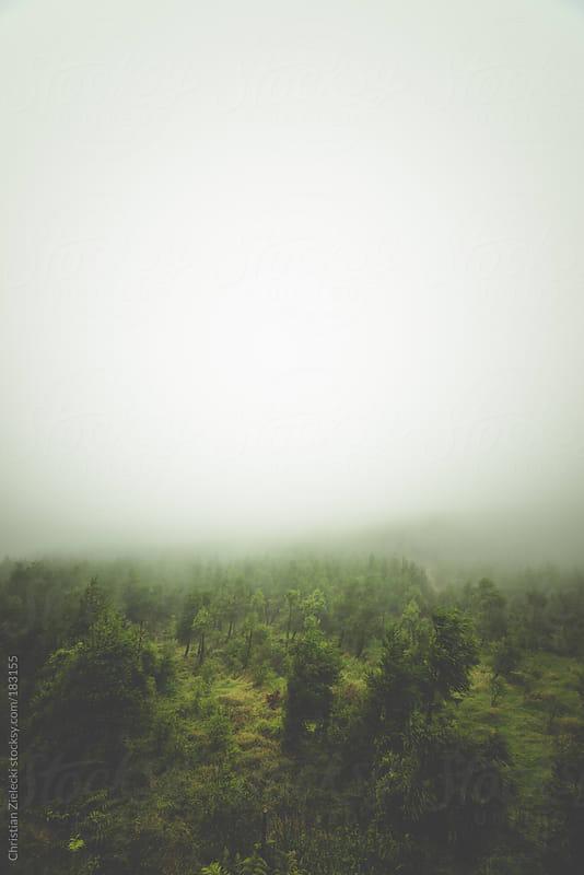 misty woods by Christian Zielecki for Stocksy United
