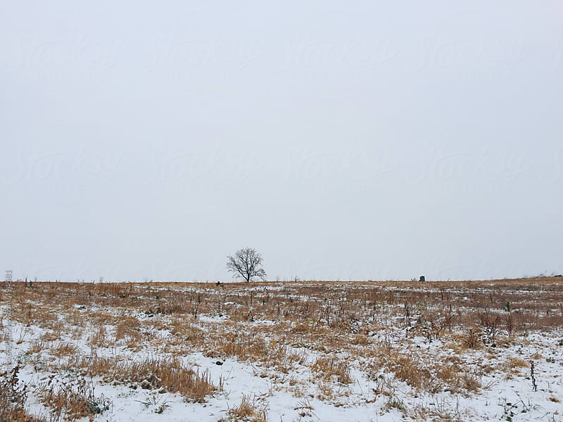 Snow covered field with gray sky above by Dimitrije Tanaskovic for Stocksy United