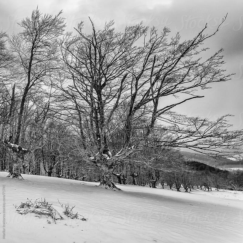Winter Landscape by Marilar Irastorza for Stocksy United