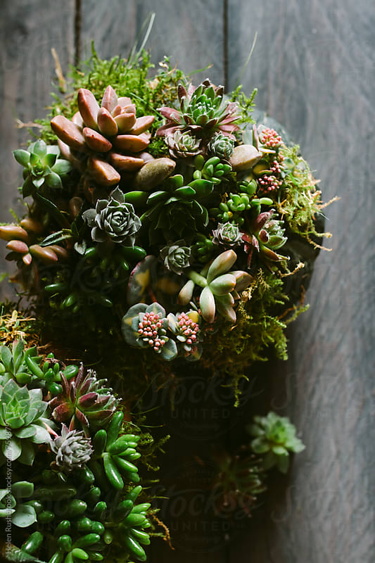 Overhead shot of tiny succulent plants by Helen Rushbrook for Stocksy United