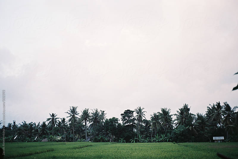 Bali Nature by Jacob Ammentorp Lund for Stocksy United
