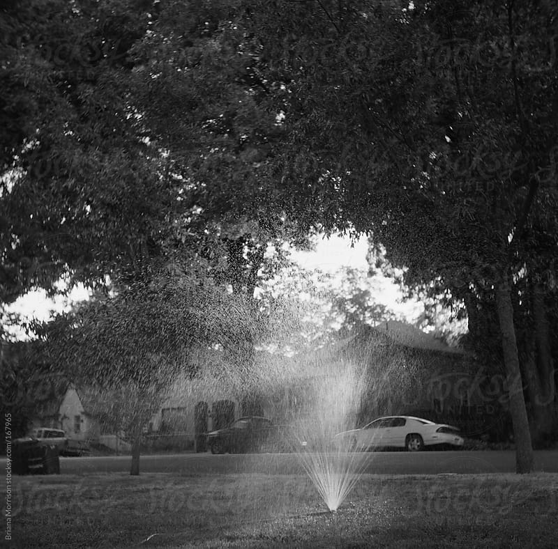 Black and White Sprinkler in the Lawn in Summer by Briana Morrison for Stocksy United