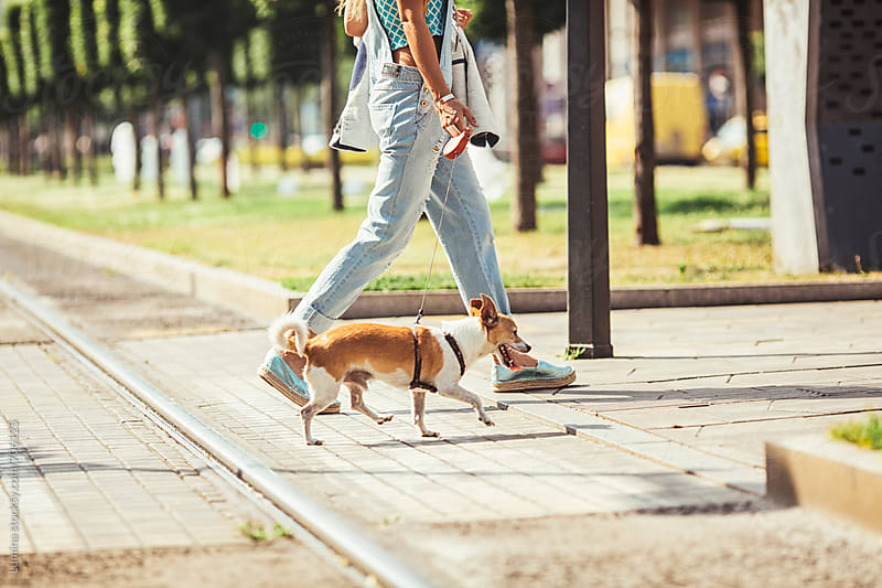 Woman Crossing the Street With Her Dog by Lumina for Stocksy United