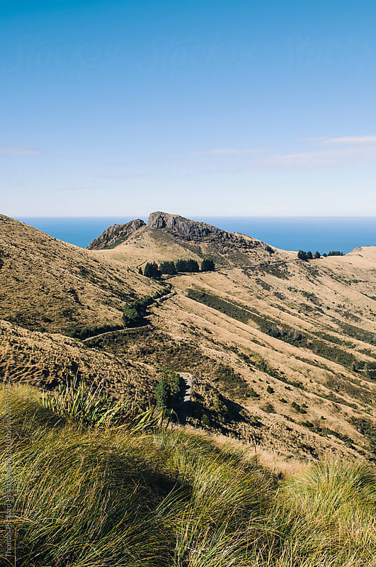 Road and grass covered hills, Banks Peninsula, New Zealand. by Thomas Pickard for Stocksy United