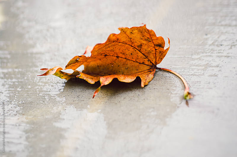 an orange leaf on the sidewalk in the rain in autumn by Deirdre Malfatto for Stocksy United