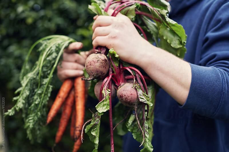 Man holding carrots and beetroot by sally anscombe for Stocksy United