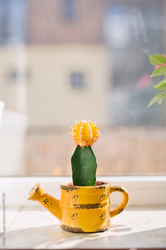 Colorful cactus on the windowsill by RG&B Images for Stocksy United