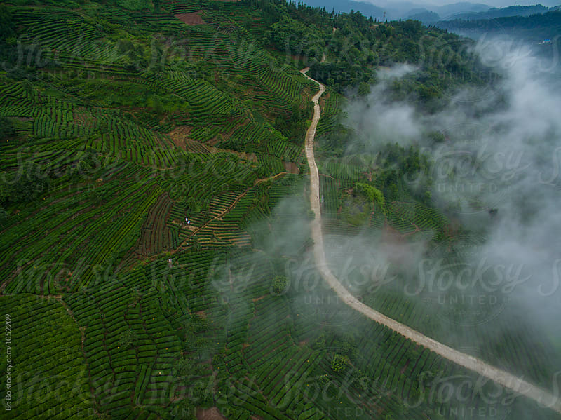 Tea Terraces in the mountain by Bo Bo for Stocksy United