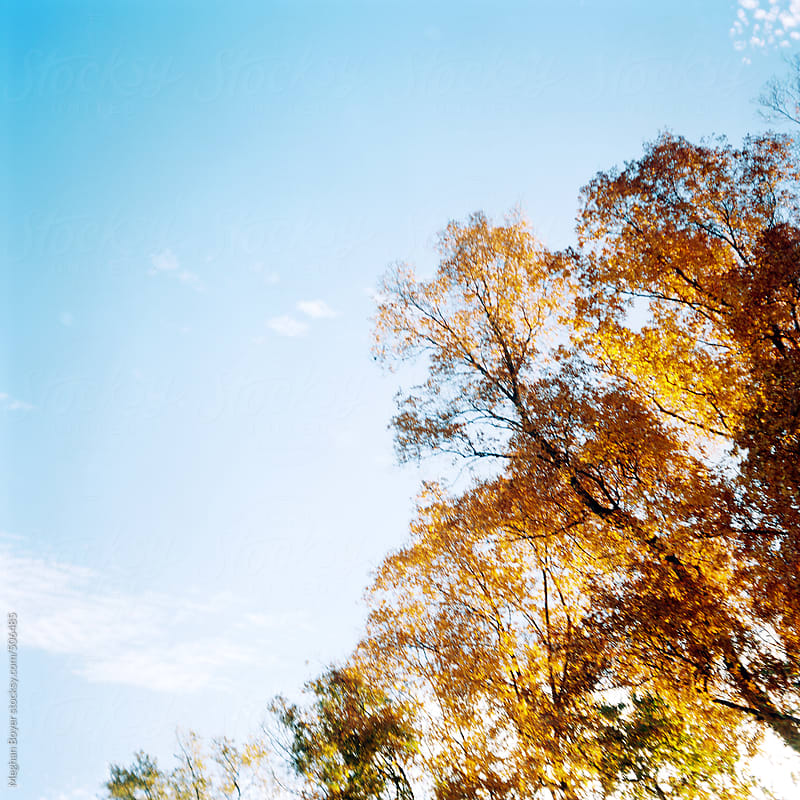 Fall foliage on film by Meghan Boyer for Stocksy United