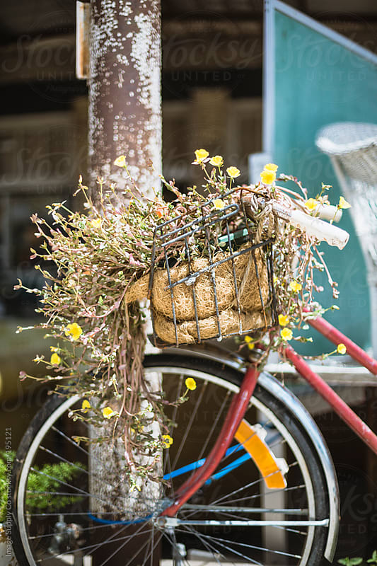 bicycle with plants growing out of the front basket by Image Supply Co for Stocksy United