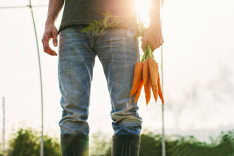 Closeup of a farmer holding a bunch of organic carrots. by BONNINSTUDIO for Stocksy United