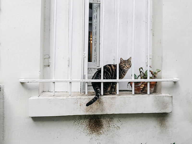 Window Kitty by Sara K Byrne Photography for Stocksy United