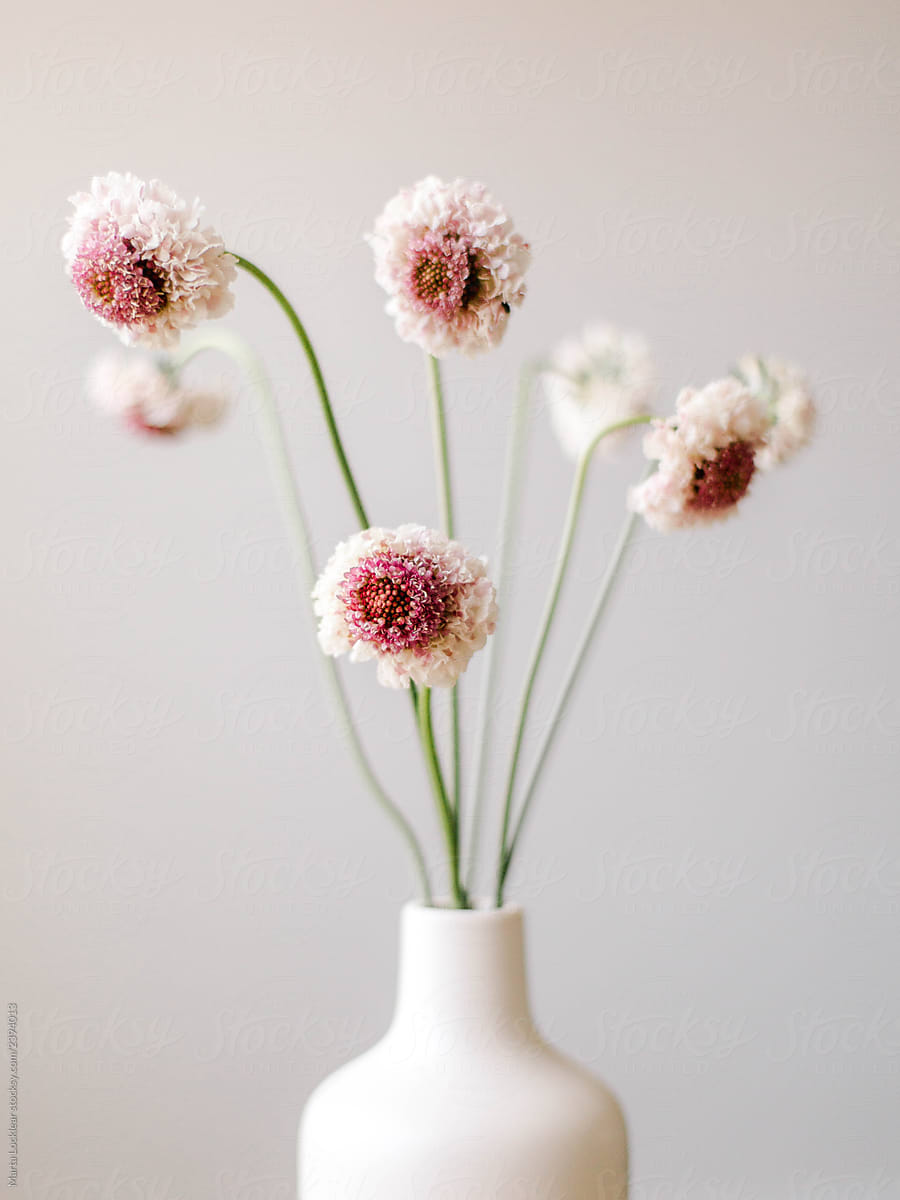 Modern White Vase With White And Fuscia Pink Flowers By Marta Locklear Stocksy United