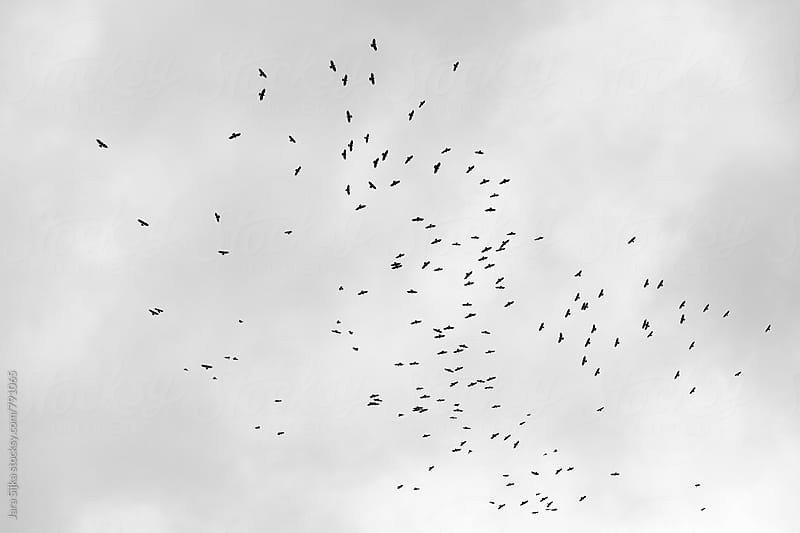 Birds at sky by Jara Sijka for Stocksy United