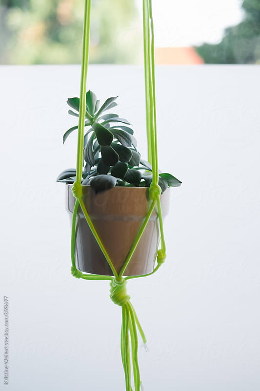 Plant Hanging in an Artist Studio by Kristine Weilert for Stocksy United