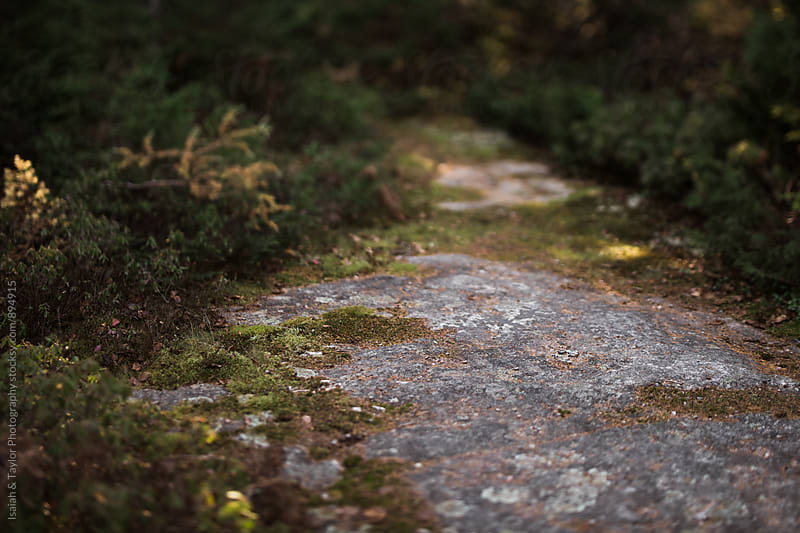 Path through nature by Isaiah & Taylor Photography for Stocksy United
